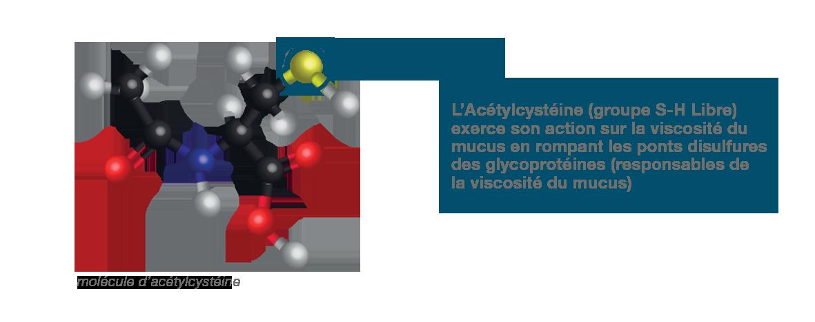 dessin de l'acétylcystéine