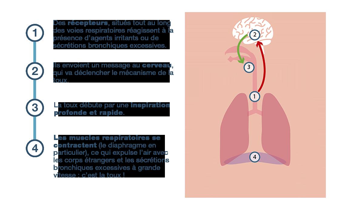 Schéma d'explication de la toux
